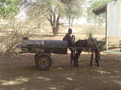 donkey trucking