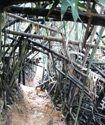 Durch den Bambuswald zur Wasserfassung